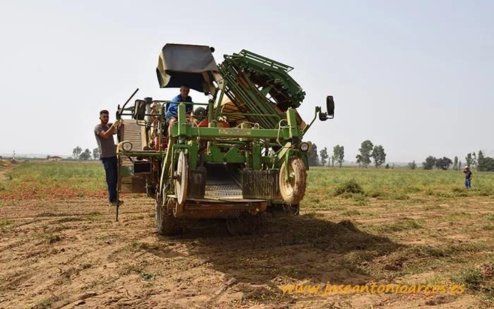 Máquina recolectora de tomate de industria en Badajoz.