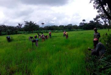 La almeriense Biorizon en Sierra Leona