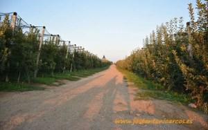 Vellsam, manzanas, Serbia.