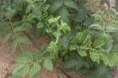 Abierto el plazo para asegurar el cultivo de primavera