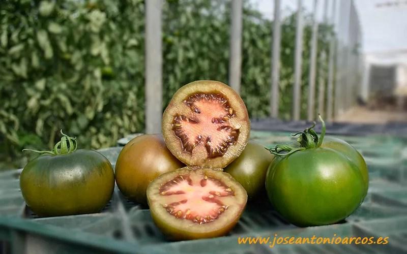 Tomate Mulato de Agrinature.