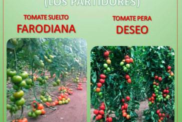 Día 7 de febrero. Jornada de tomate de Huertasem y LLavors Horta