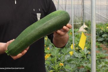El proyecto Naturpick dará valor a las hortalizas no comerciales