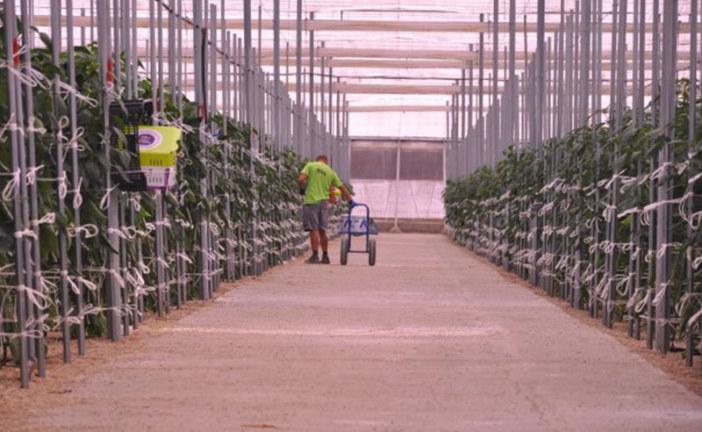 SDC ejecuta una planta de CO2 en Zoi Agrícola