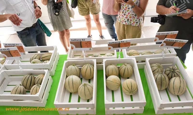 Ready to Eat. Rijk Zwaan. Melones charentais. /joseantonioarcos.es