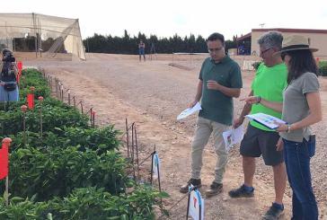 Asfertglobal logra en pimiento en Murcia ahorrar un 50% de abono