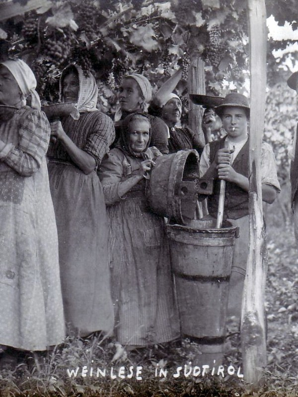 Meran 1920, Weinlese