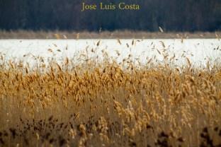 Jose_Luis_Costa0011