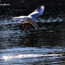 Contraluz con sus alas abiertas