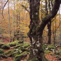 Valle de Irati. Navarra