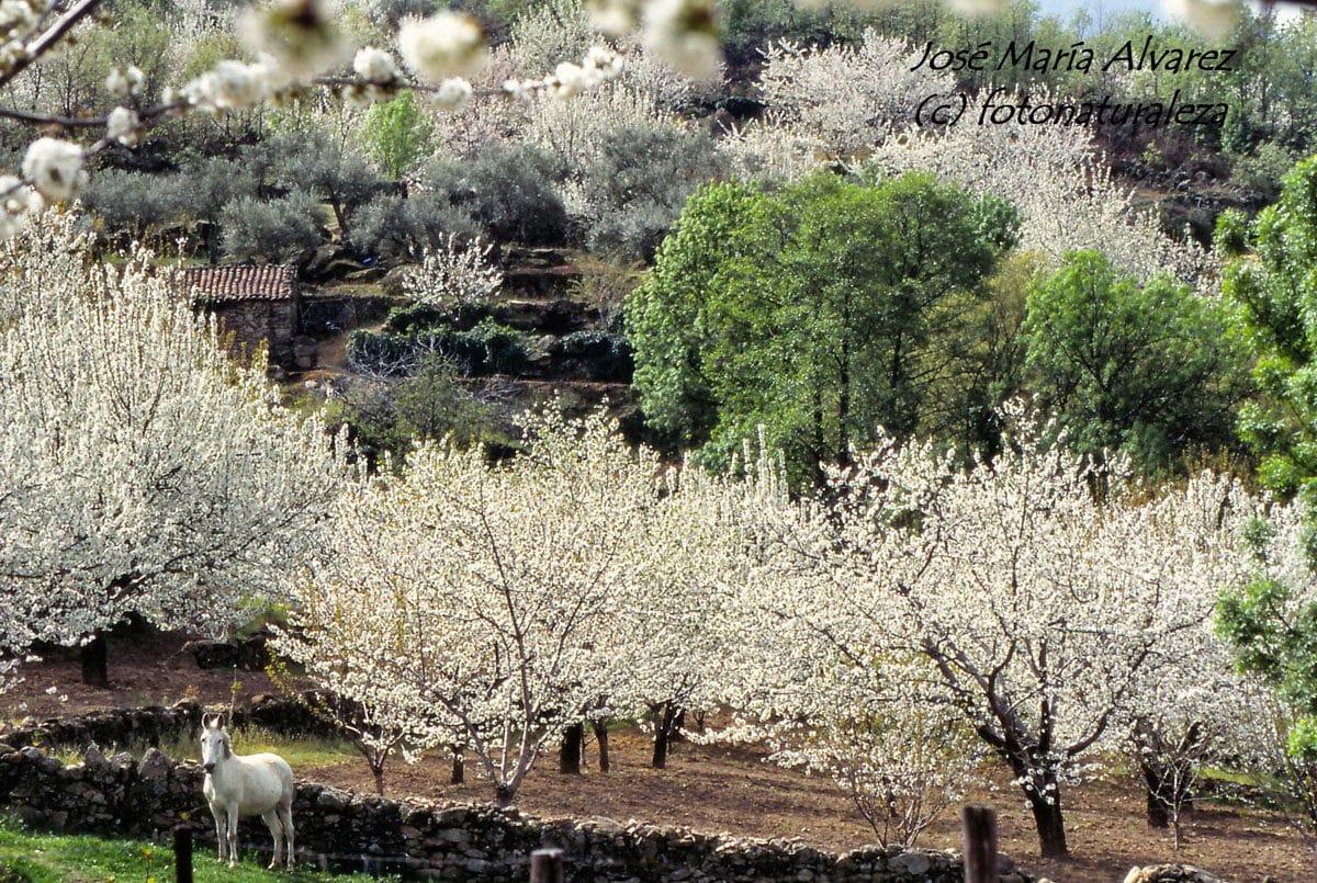 Valle del Jerte 5