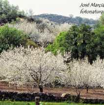 Valle del Jerte 7
