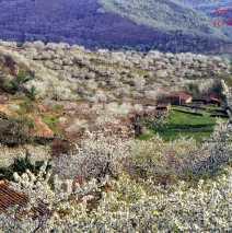 Valle del Jerte 3