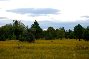 After a long and productive Monsoon season in Northern Arizona, the flowers grew extremely well in the fall of 2010.