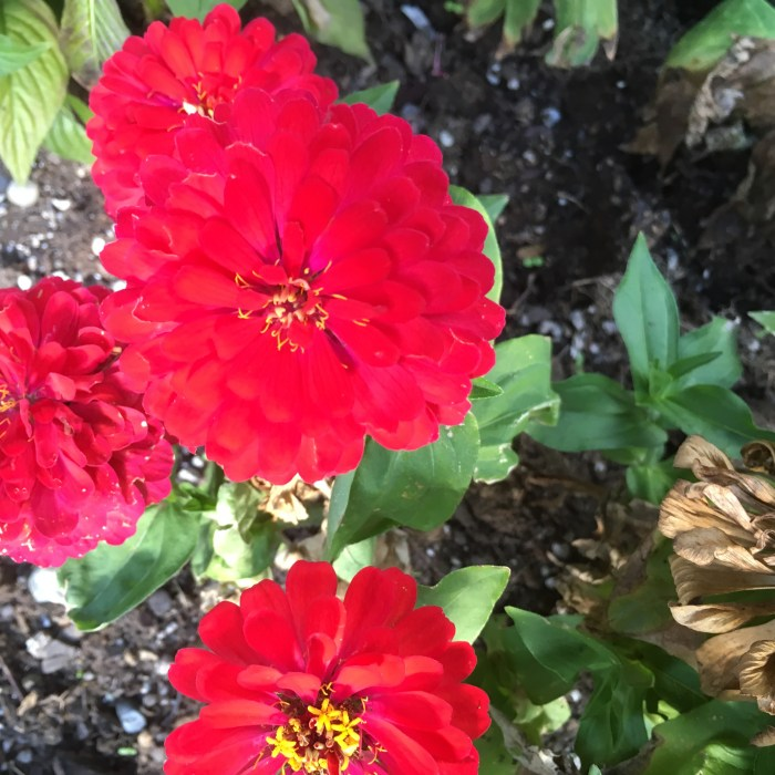 Spring Flower 001 (3)