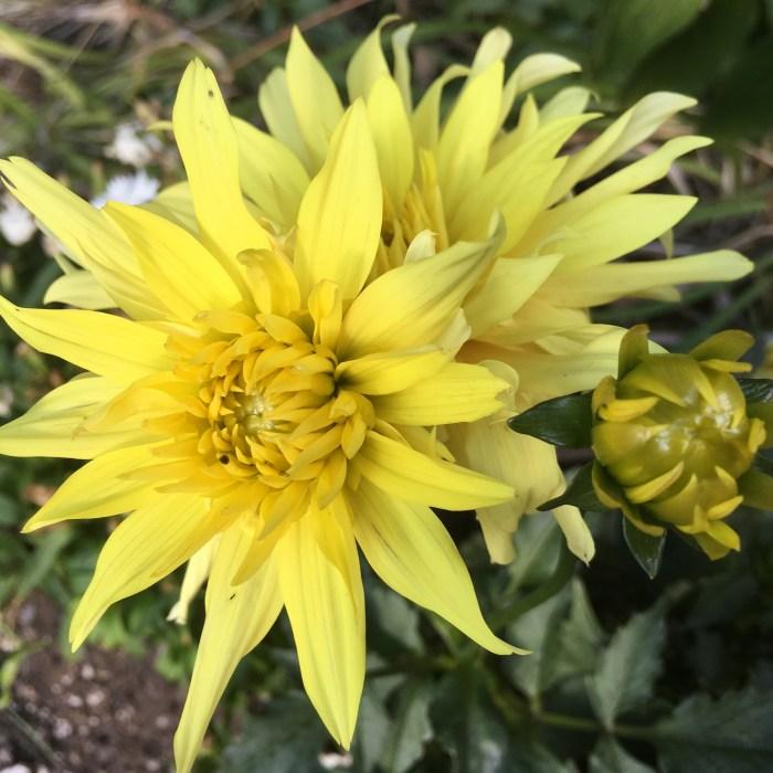 Spring Flower 001 (5)
