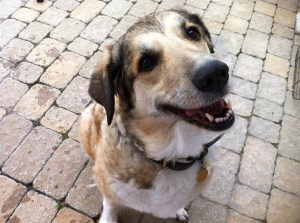 Sis's dog #2: Roxie (Roxy?).