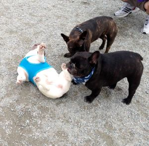 May 2, 2012: This Blog Goes To The Dogs.  Again!