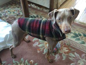 Ralphie - always stylin'