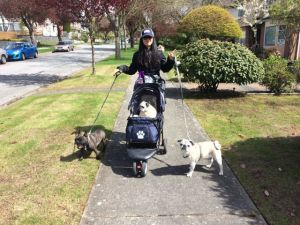 An afternoon walk/roll with the dogs.