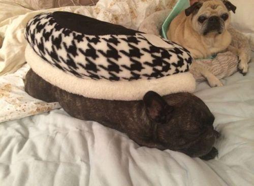 November 25, 2014: Akemi Opining, Snow Monkeys Winning, Doggies Relaxing!