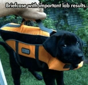 August 1, 2016: Dark Matter Dog Theories!
