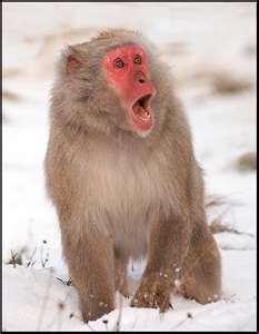 November 27, 2016: Sunday Monkeys, Pugs, And Ghostly Images!