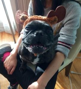 November 13, 2016: Dog Days Of November!