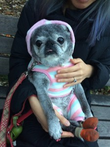 December 2, 2017: Our One  Year Anniversary With Suji!
