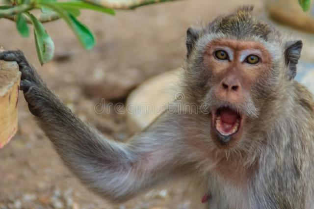 Angry-monkey-was-disturbed-human-close-up-84766163