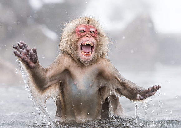 Snow-monkey-hot-spring