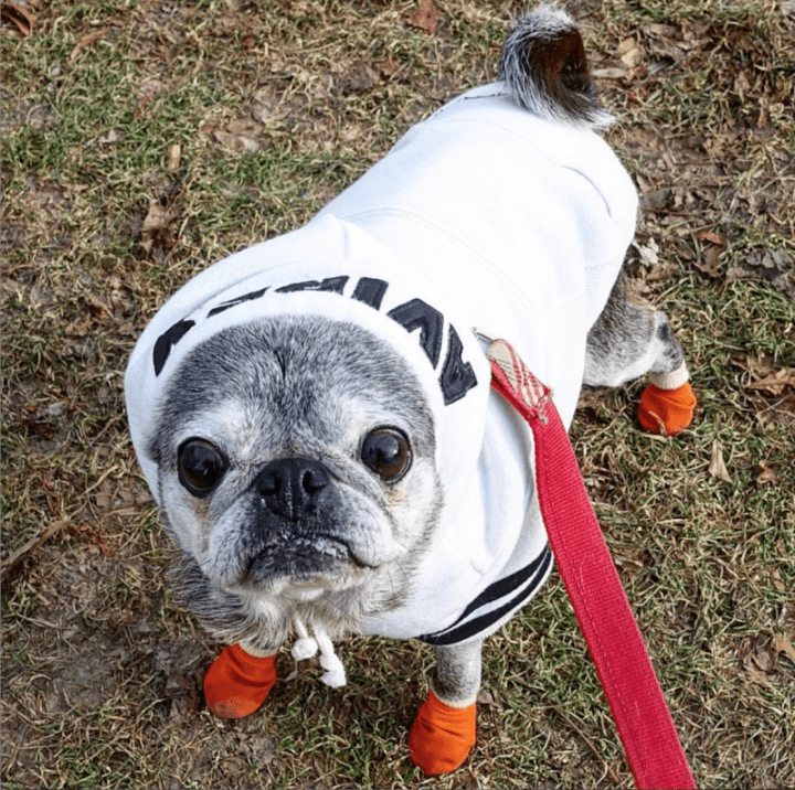 January 13, 2019: Suji Sunday!