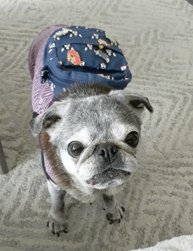 March 10, 2019: Suji Sunday!
