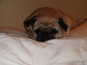 Jelly tends to settle in for the night on one of the pillows.