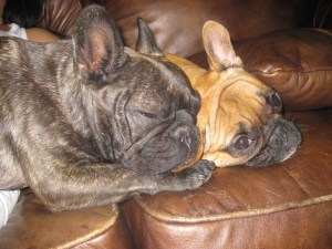 The Frenchies post-party crash.