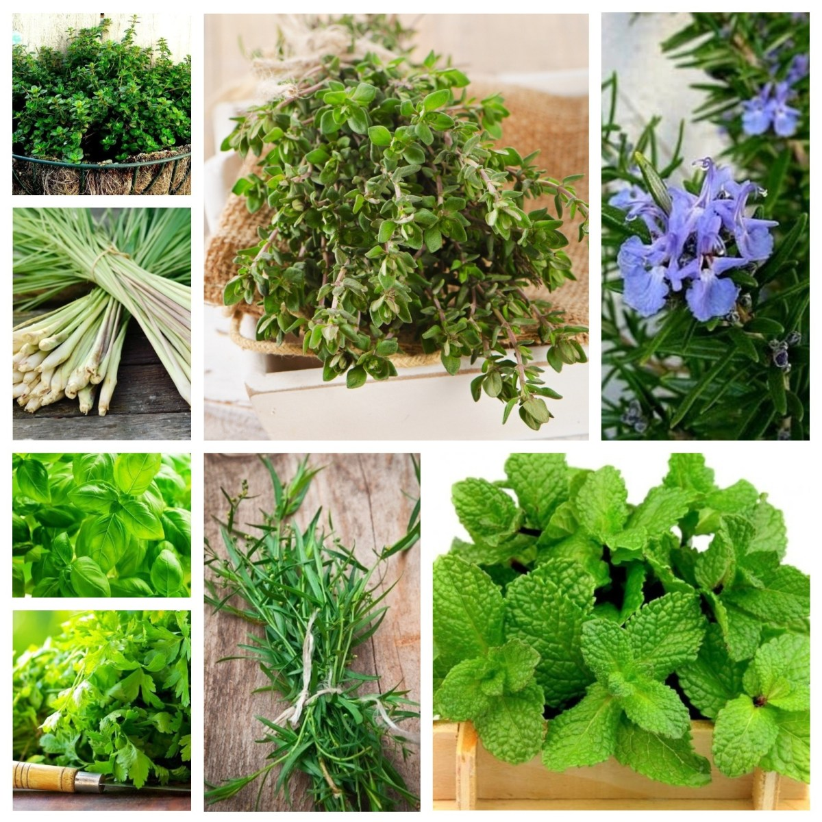 How are Medicinal Herbs planted?