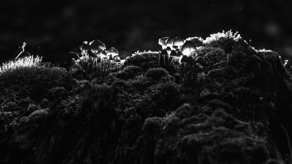 Nature-champignon-foret-automne-2