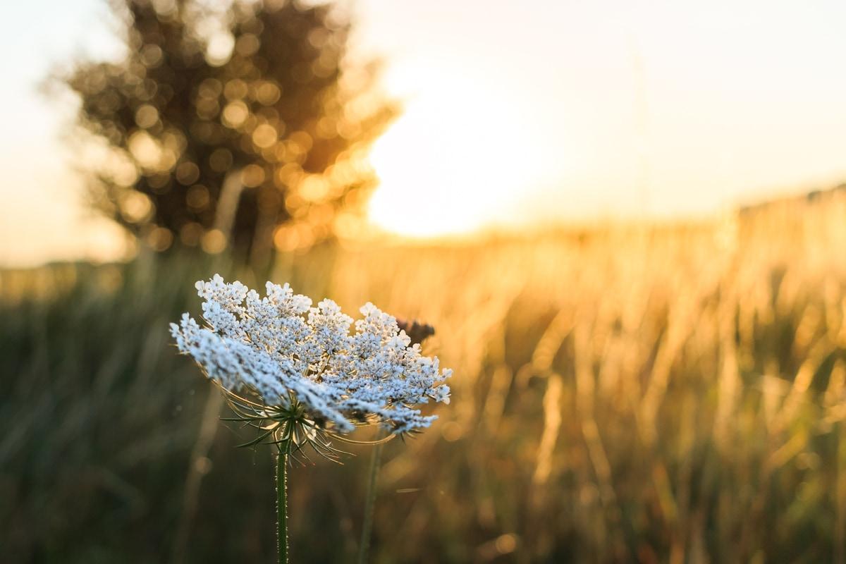 Nature-fleur-ete-2