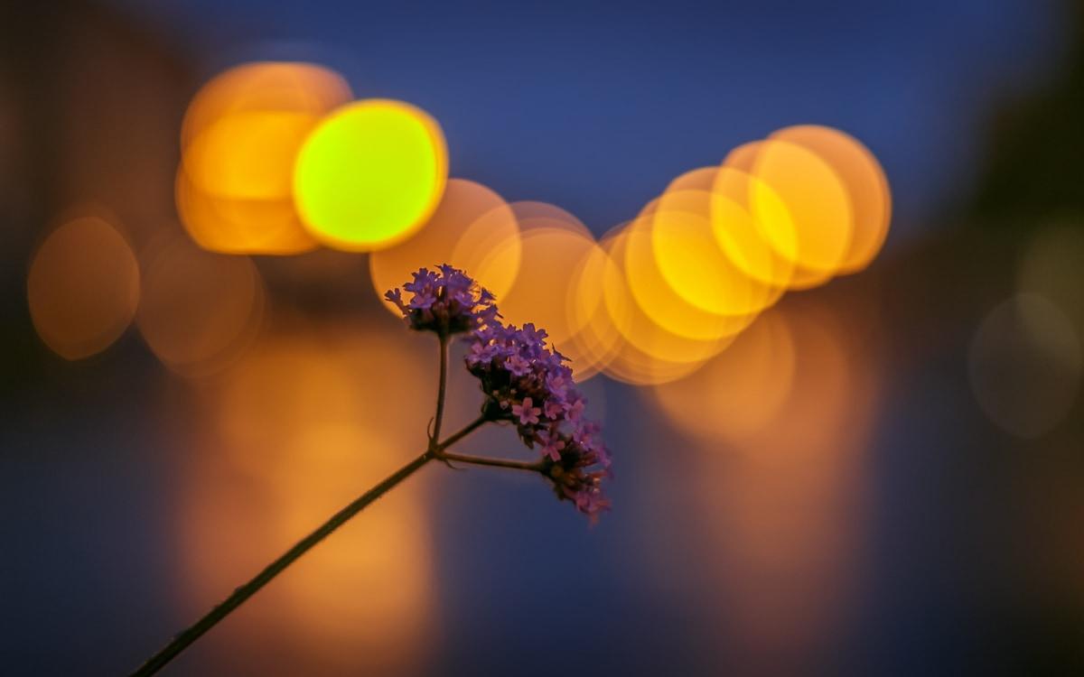 Nature-fleur-ete