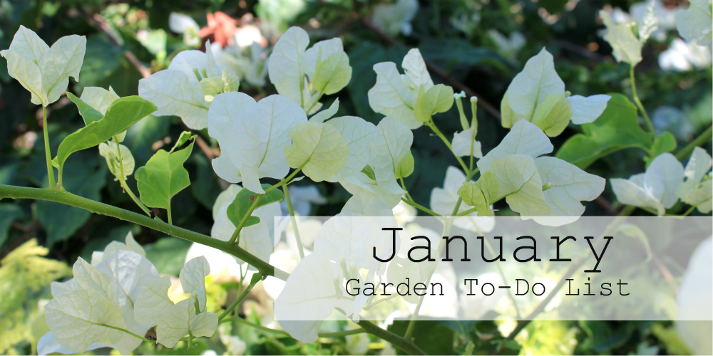 Los Angeles Gardening Tips: January Garden To-Do List