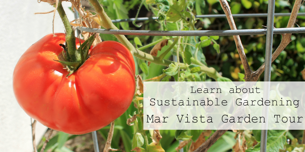 Learn About Sustainable Gardening at Mar Vista Green Garden Showcase Tour