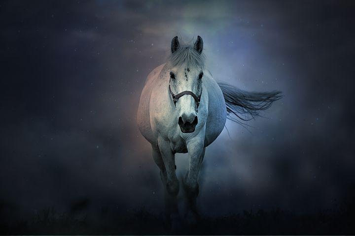 Un caballo tordillo caminando hacia el lector.