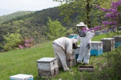 Greece - Pindus. Bee-hives