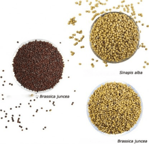 seeds.jpeg