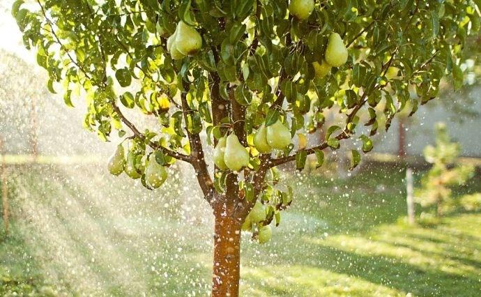 treefruit