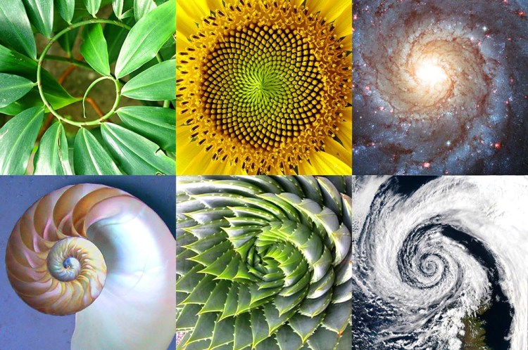 Image result for the golden ratio