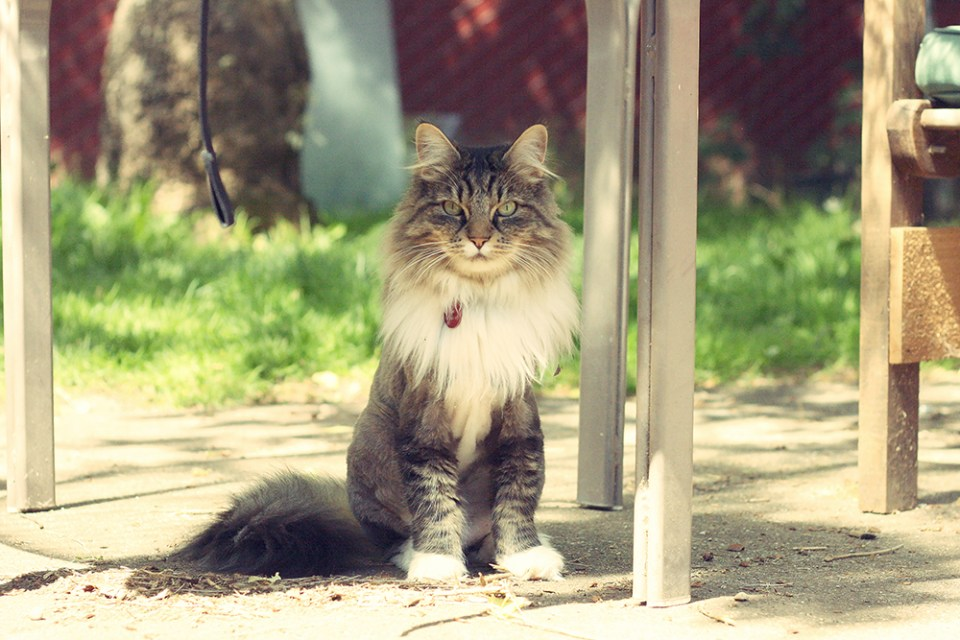 Lioncat. Apparently he had dreadlocks that prompted a shearing.