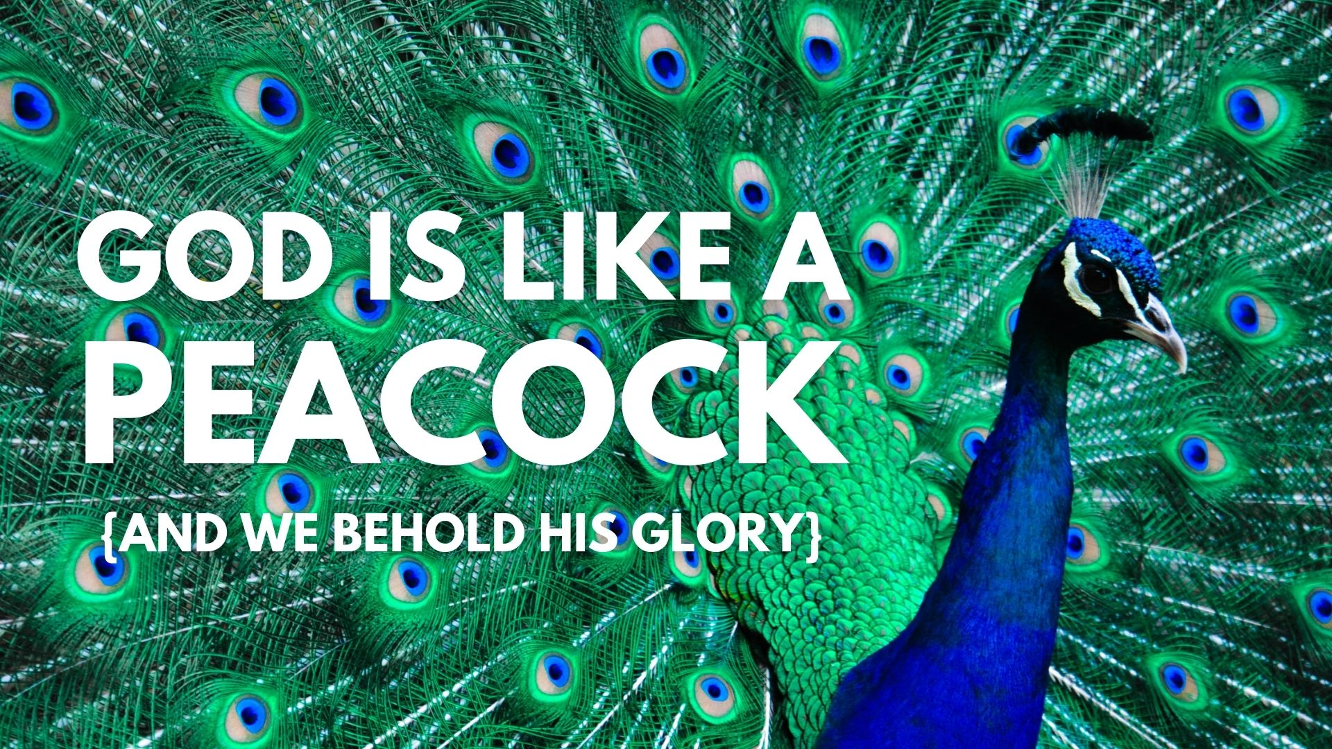 God is like a Peacock
