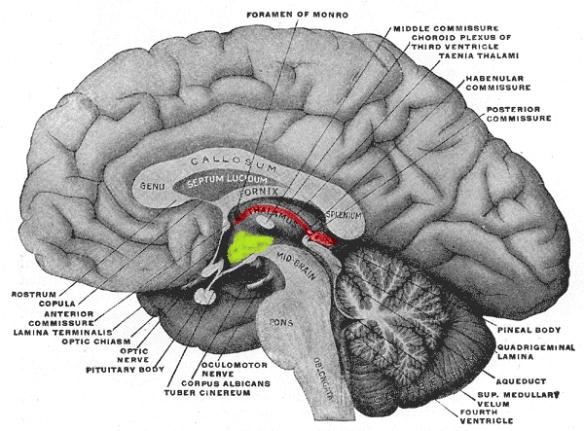 Mid-brain