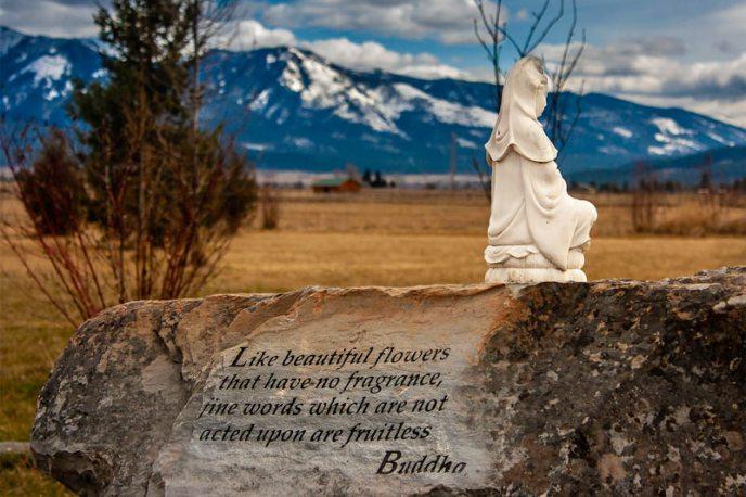 Ms.Buddha